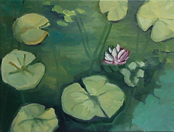 Water Lilies / Nympheas