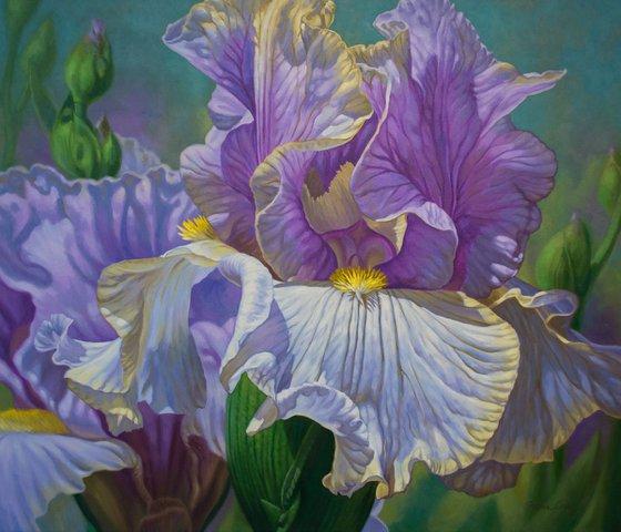 Floralscape 4: Mauve and Purple Irises