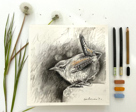 Wren #01 charcoal drawing on paper - 210mm x 210mm