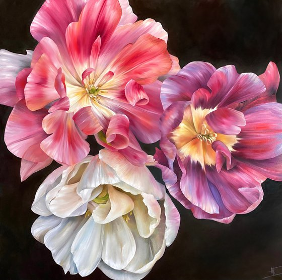 Three tulips, pink, violet and white. On dark, black background. Interior big oil painting