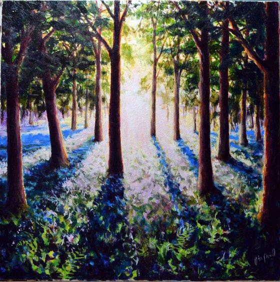 New Woodland Morning