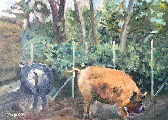 Delightful Kune Kune Pigs - an original oil painting!