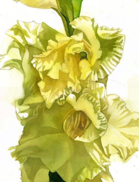 yellow gladiolos watercolor floral