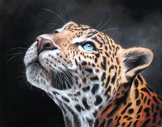 "Leopards Gaze  (Original Painting)  14"" x 11"""