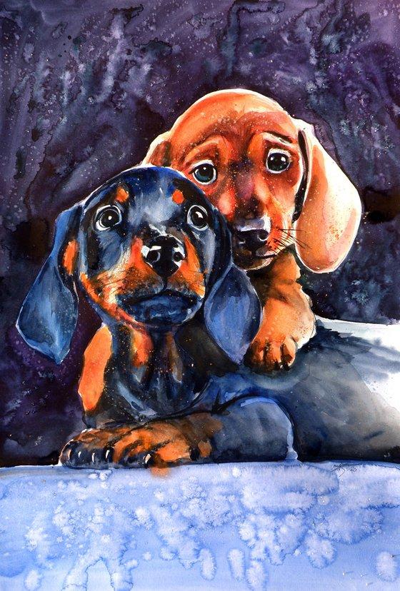 Dachshund puppies /50 x 35 cm/