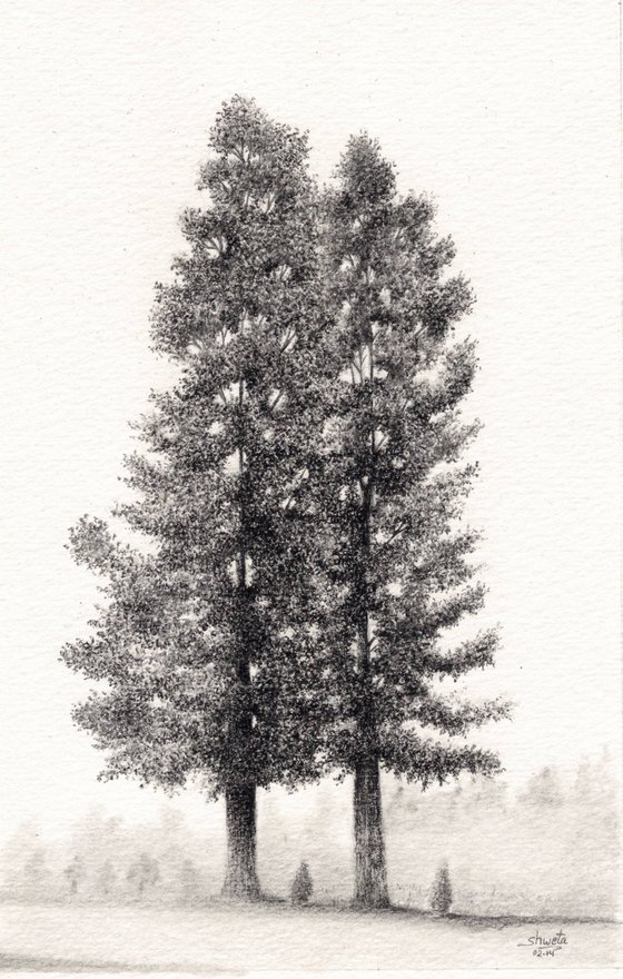 Pine trees Pencil Drawing