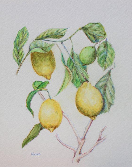 Lemon Tree III