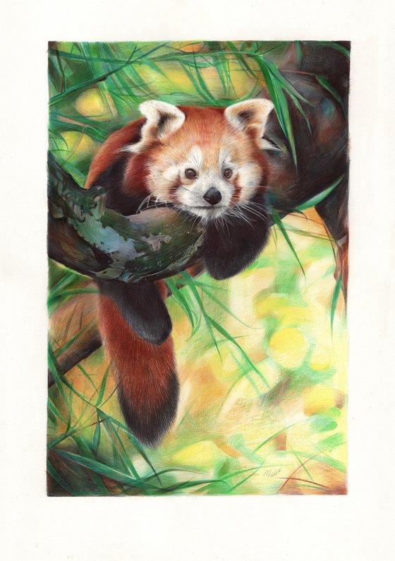 Red Panda (Ballpoint Pen Drawing)