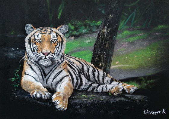 Bengal tiger while resting