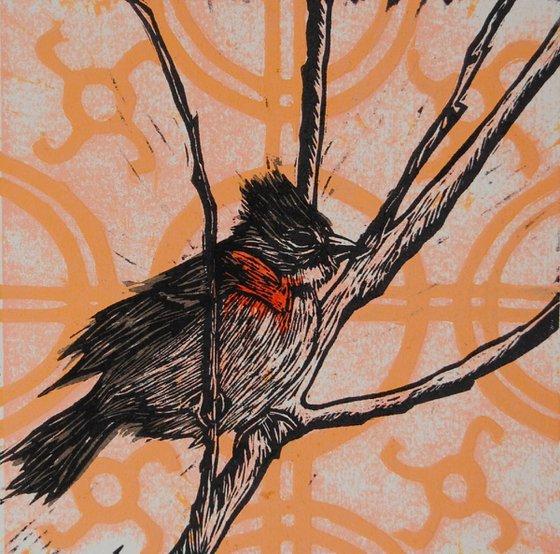 Serie Pájaros Chilenos: Chincol