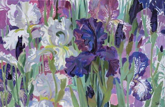 Irises. White. Blue. Lilac