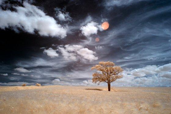 Kithurst Tree #13