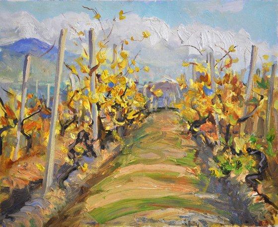 Golden wineyard