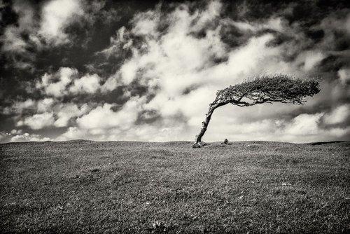 Beachy Head Tree