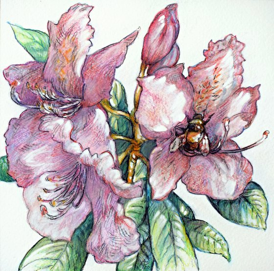 Rhododendron with bumblebee