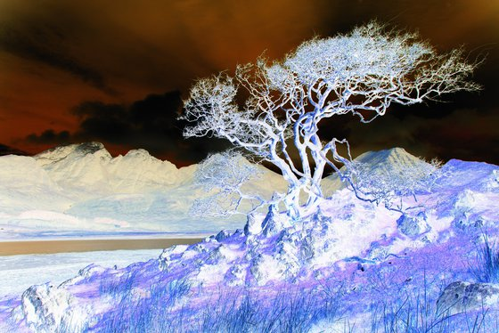 Ghost Tree, Scottish mountain landscape