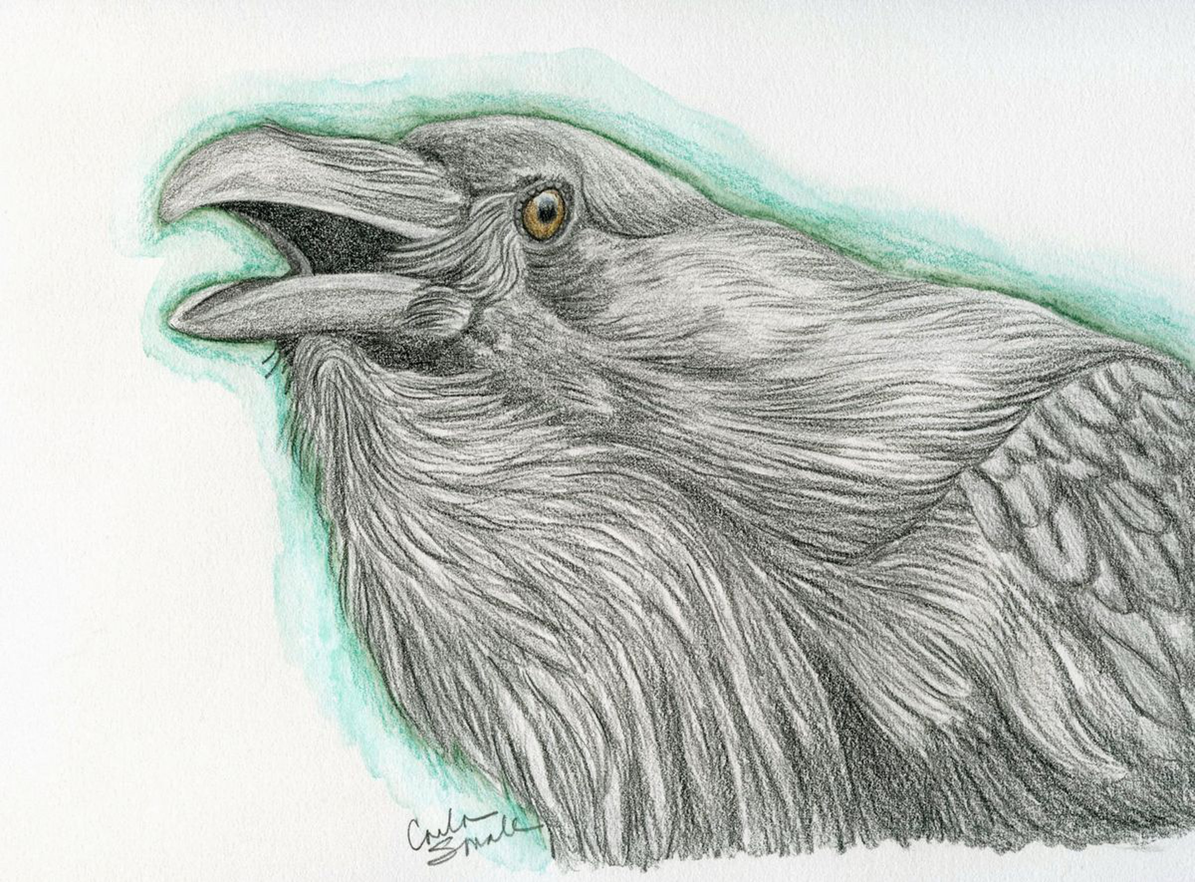 Raven crow bird wildlife art original drawing 7 x 9 carla smale