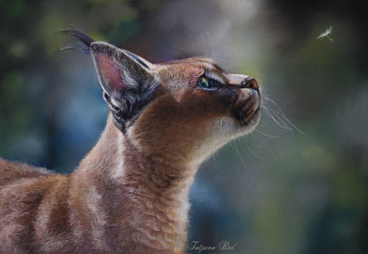 Caracal Or The Desert Lynx By Tatjana Bril Artfinder