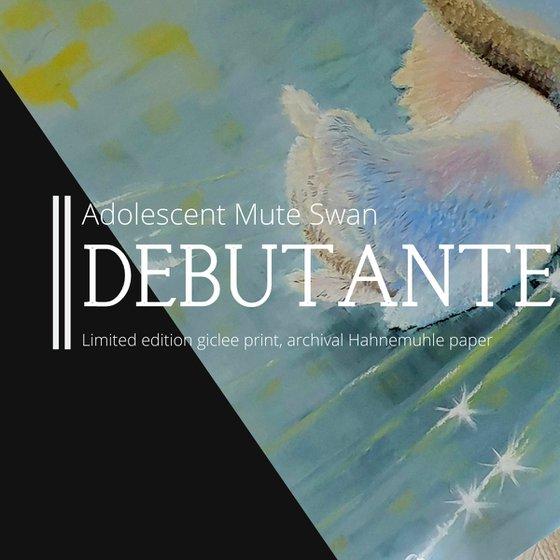 Debutante, mute swan