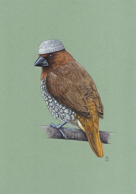 "Original pastel drawing bird ""Scaly-breasted munia"""
