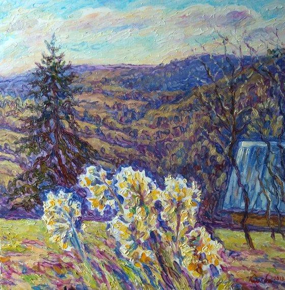 Primrose in the Carpathians