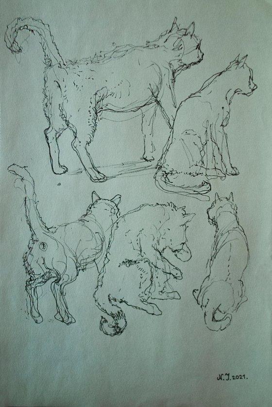 Five stray cats