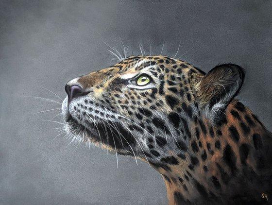 Leopards Gaze III (Original Painting)