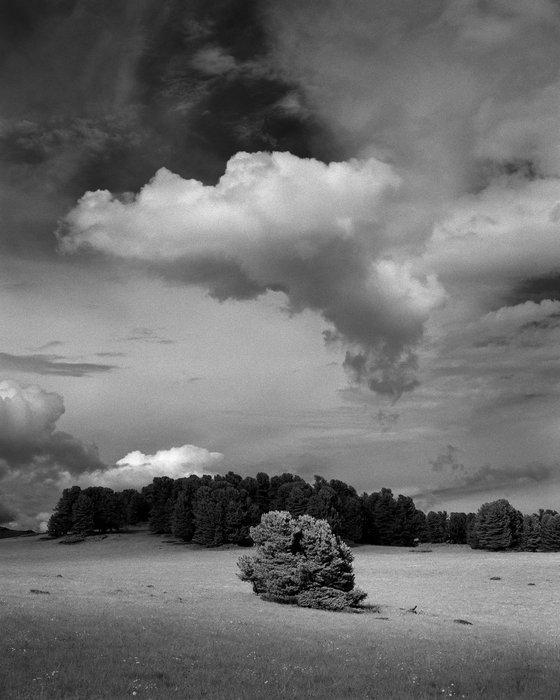 Lone cedar and cloud