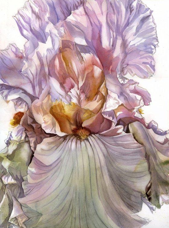 the scent of spring iris
