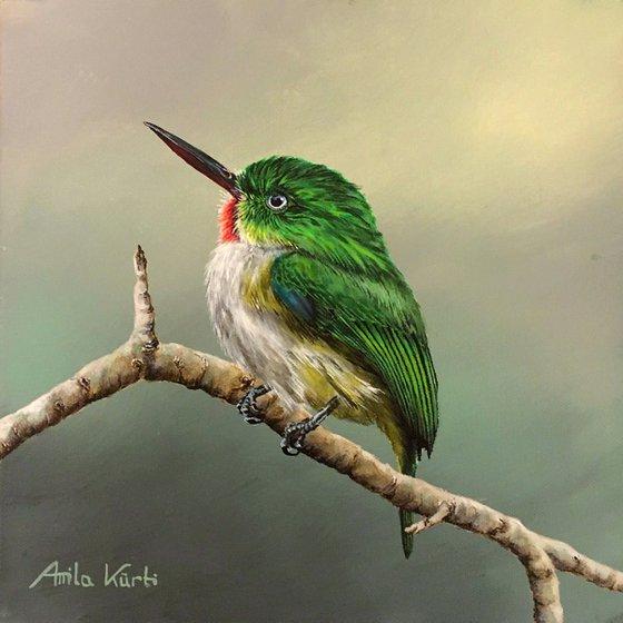 Tody Bird