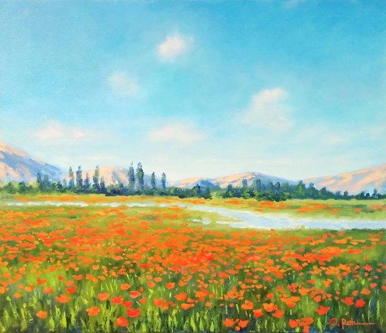 Poppy field in the valley