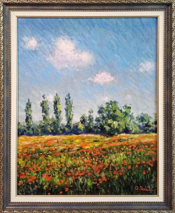 Poppy field at noon