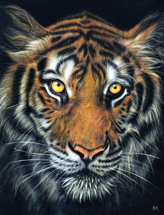 Tiger IV (Original Big cat Painting)