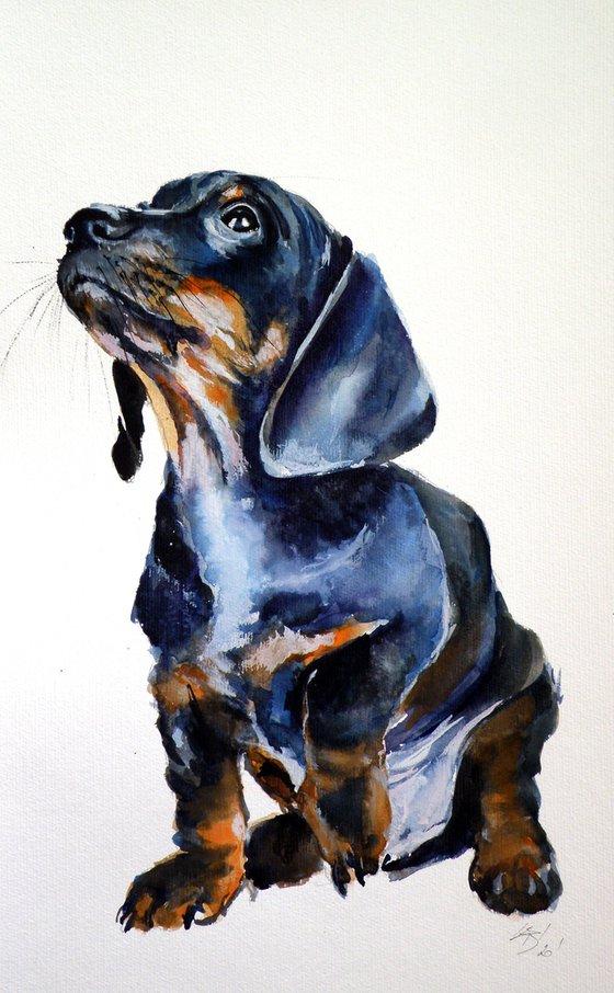 Dachshund puppy /50 x 30 cm/