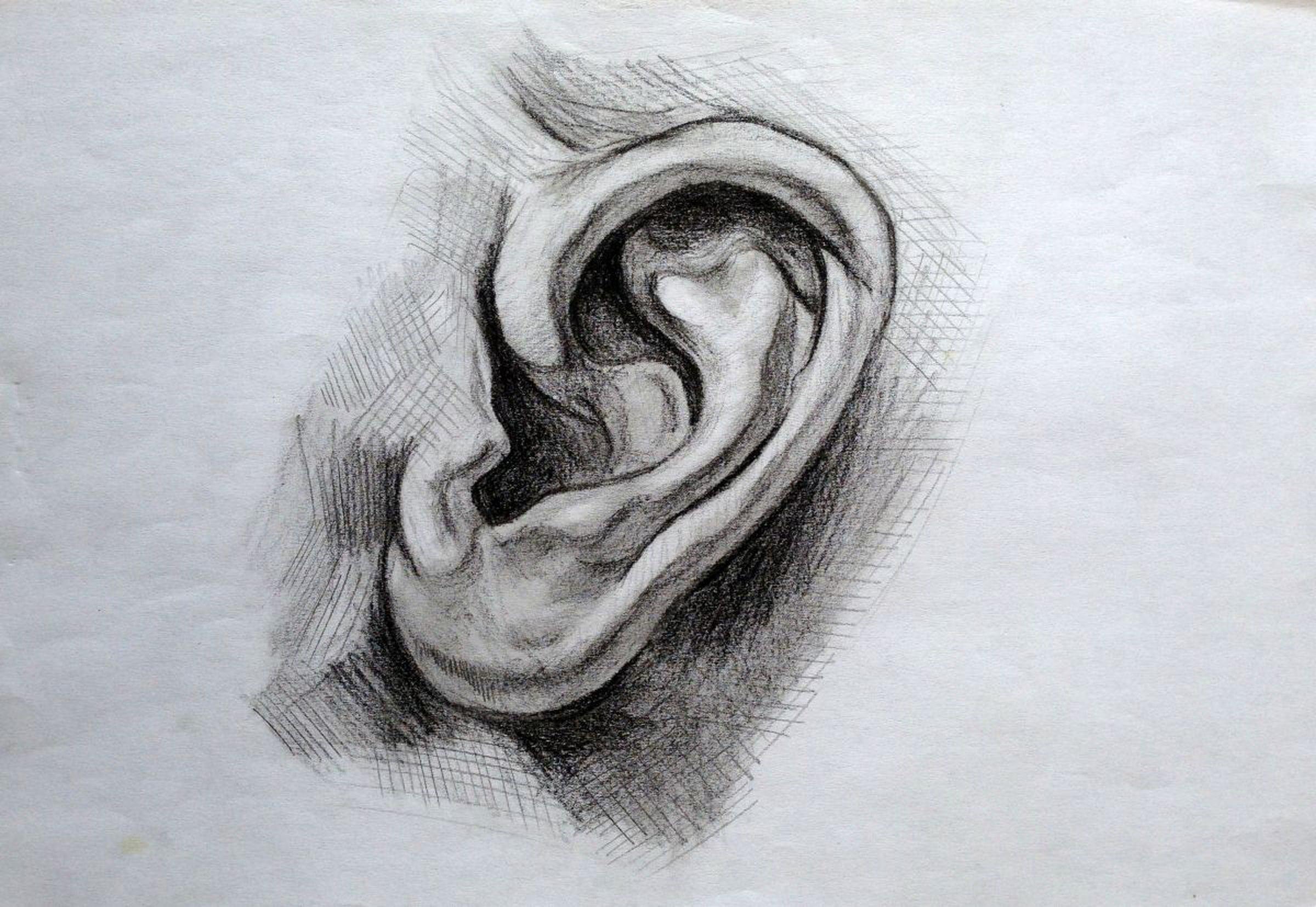 Ear 2