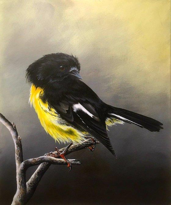 Tomtit Bird