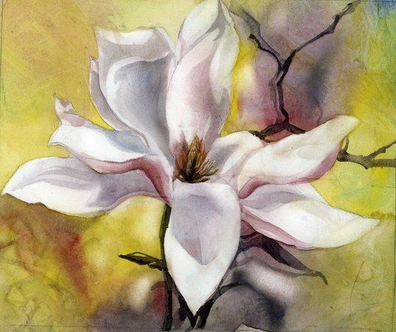 magnolia in pink watercolor floral