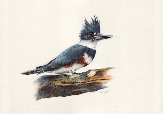 Belted Kingfisher (Ballpoint pen drawing)