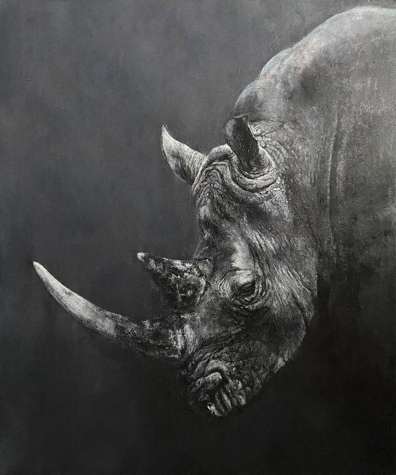 Rhinoceros from the shadows