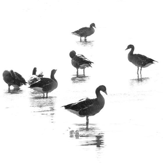 Geese, black and white minimal impressionist wildlife