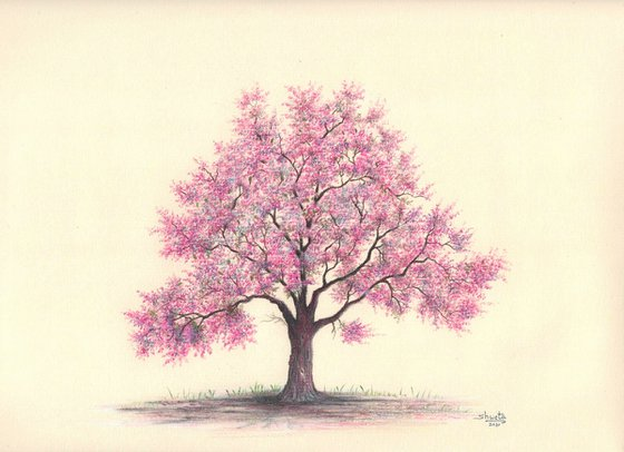Crabapple Tree Colored Pencil Drawing