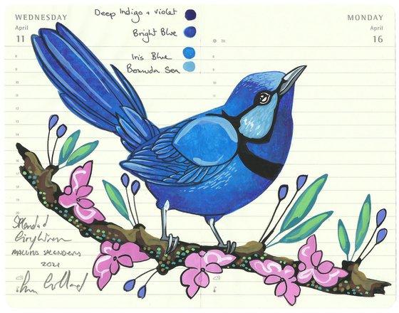 Birds of Australia: Splendid Fairywren