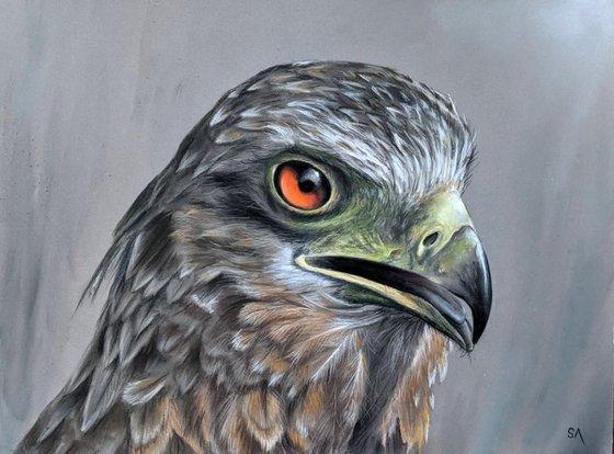 Eagle Eye II
