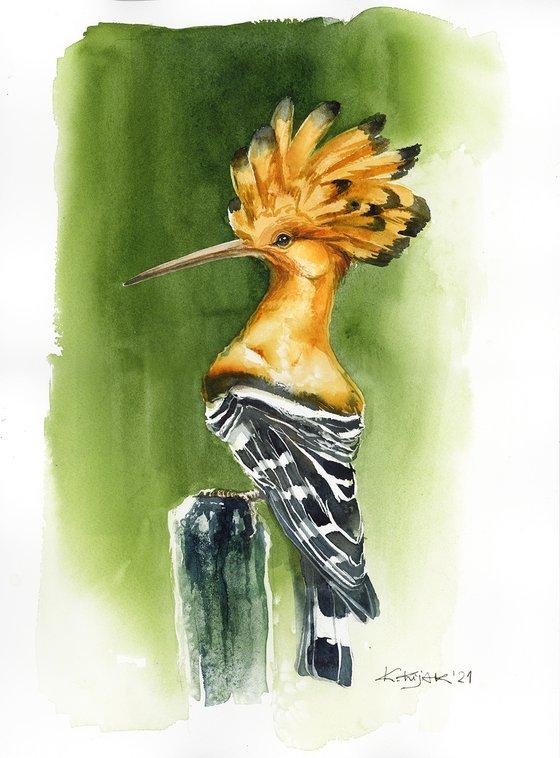 Hoopoe, wildlife, birds watercolours