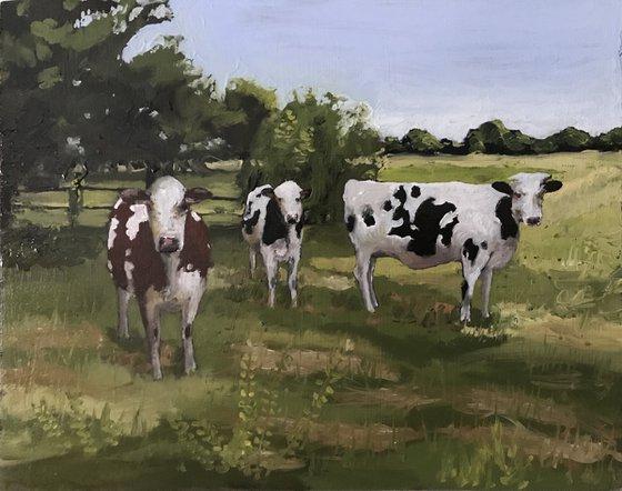 Cows - 2