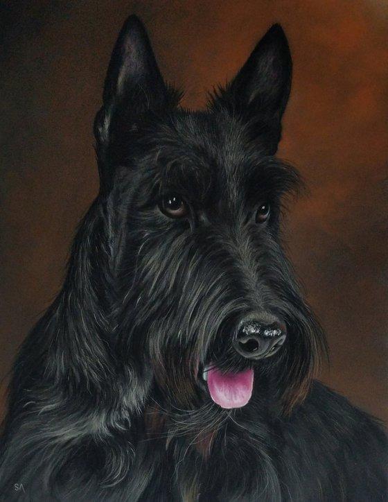 Scottish Highland Terrier ll (Original Painting)