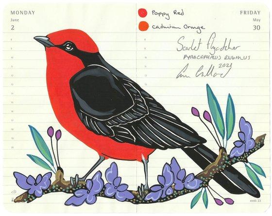 Birds of South America: Scarlet Flycatcher