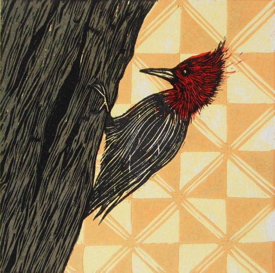 Serie Pájaros Chilenos: Carpintero