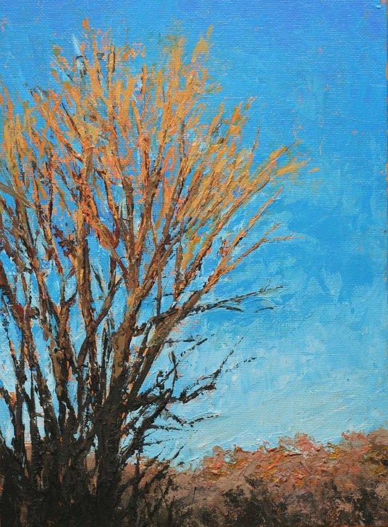 Golden Treetops