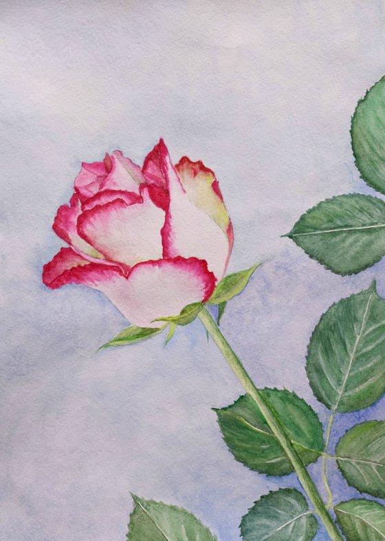 """Rose"" 21 x 29 cm - flower , impressionism ,realism , rose, beautiful, gift idea"